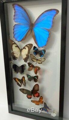 12 Real Framed Butterflies Size 7.5x15.5inches Double Glass Great Finish
