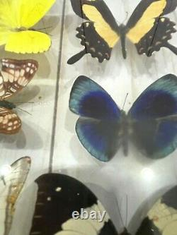 14 Real Butterflies Moths Display Taxidermy Double Glass Shadow Box Frame