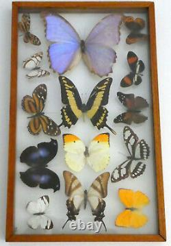 14 Real Butterflies Moths Display Taxidermy Double Glass Shadow Box Frame RARE