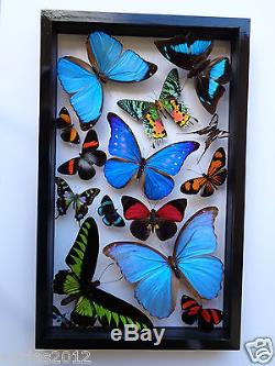 15 REAL BUTTERFLIES FRAME. M. HELENA. SEE THRU. DOUBLE GLASS. MOUNTED. BLACK FRAME