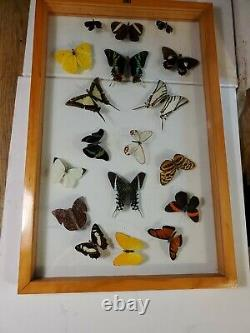 18 Taxidermy Butterflies in Wooden Frame With Double Glass Approx. 13 x 19 1/2