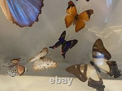 23 REAL BUTTERFLIES FRAMED SPECIAL COLLECTION MOUNTED DOUBLE GLASS 18.5x15.5