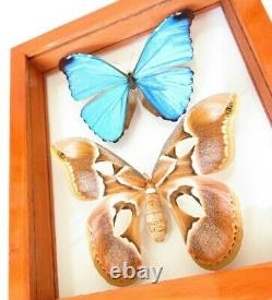 2 Real Framed Butterfly Blue Morpho Absoloni & Moth Rothschildia Double Glass