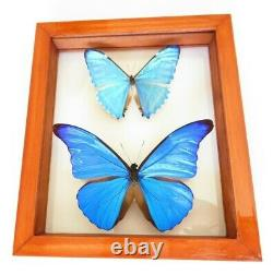 2 Real Framed Butterfly Blue Morpho Cacica & M. Zephyritis Mounted Double Glass
