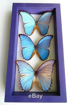 3 Real Framed Butterflies Size 7.5''x14'' Double Glass Blue Morpho Collection