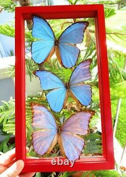 3 Real Framed Butterflies Size 7.5x13.5inches Double Glass Amazing Butterflies
