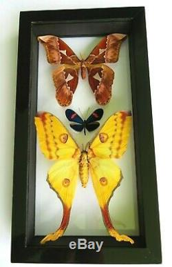 3 Real Framed Butterflies Size 7.5x14inches Double Glass Amazing Butterflies