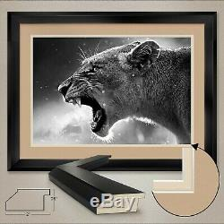 44Wx32H ROAR OF THE LIONESS by STUDIO ANTO LION DOUBLE MATTE, GLASS & FRAME