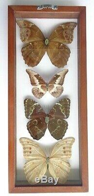 4 Real Butterflies Framed Blue Morpho Collection Mounted Double Glass 6.5