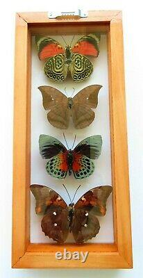 4 Real Butterflies Framed Special Collection Mounted Double Glass 4.5x10.5