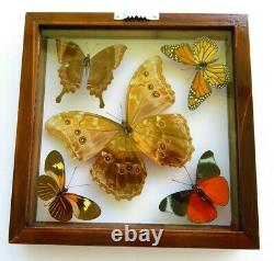 4 Real Butterflies Framed Special Collection Mounted Double Glass 8.5x8.5