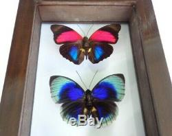 4 Real Framed Butterflies Size 13x6inches Double Glass Special Butterfly