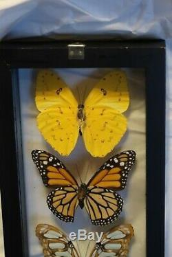 5 REAL FRAMED BUTTERFLIES SIZE 6X13 INCHES DOUBLE GLASS Amazing Colors