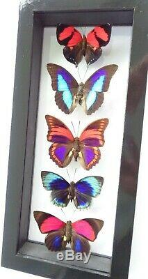 5 Real Butterflies Framed Special Collection Mounted Double Glass 6x13inches