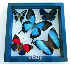 5 Real Framed Butterflies Male Double Glass Navy Blue Frame 8.5x8.5inches