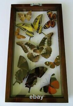 8 Real Framed Butterflies Size 7.5x13.5inches Double Glass Amazing Butterflies
