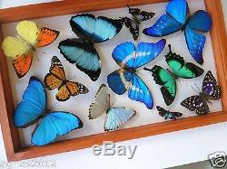 9 REAL BUTTERFLIES FRAME. M. HELENA. SEE THRU. DOUBLE GLASS. MOUNTED. PERU4