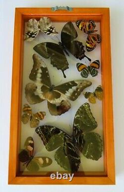9 Real Framed Butterflies Size 7.5x13.5inches Double Glass Amazing Butterflies
