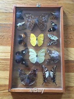 Butterfly Collection Double Glass 13 Real Butterflies Framed Peru Blue  Morpho
