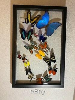 Beautiful Double Glass Framed 18 Butterfly Display From Peru NEW