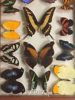 Large 14 Piece BUTTERFLY COLLECTION IN DOUBLE-GLASS FRAME! VINTAGE ECUADOR ITEM