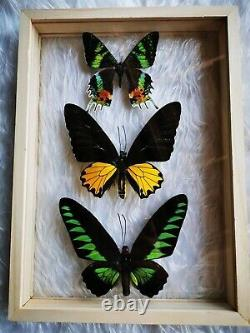 Mix Butterfly Insect Taxidermy Double Sided Acrylic Glass Display Frame