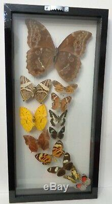 Rainbow Flight12 Real Framed Butterflies Size 7.5x15.5inches Double Glass
