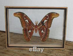 Real Attacus Atlas Moths(M) Butterfly Taxidermy Double Glass in frame /MS0A