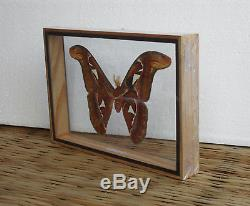 real attacus atlas mothsm butterfly taxidermy double glass in frame ms0a - Double Glass Frame