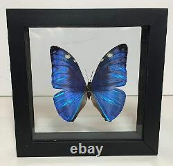 Real Butterflies-3 Frames Collection Taxidermy Insects in Double Glass Trio