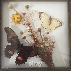 Real Butterflies Display Taxidermy Double Glass Shadow Box Frame 8 x 8
