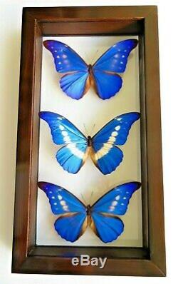 Real Framed Butterflies Size 7.5x14inches Double Glass Amazing Butterflies