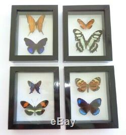Set Of 4 Frames Of Real Butterflies In Double Glass Great Finish Size 4.5x5.5