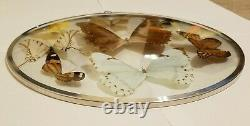 Vintage Rare Framed 9 Taxidermy Butterflies Display In Round Convex Double Glass
